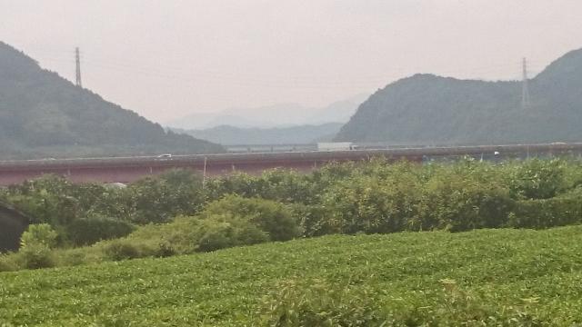 茶畑・東名高速道路のコラボ