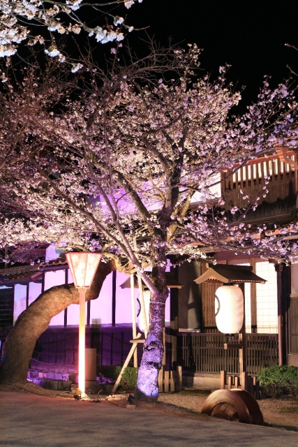 がいせん桜並木