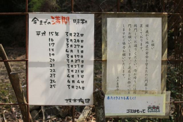 【2014/3/29撮影】例年の満開時期