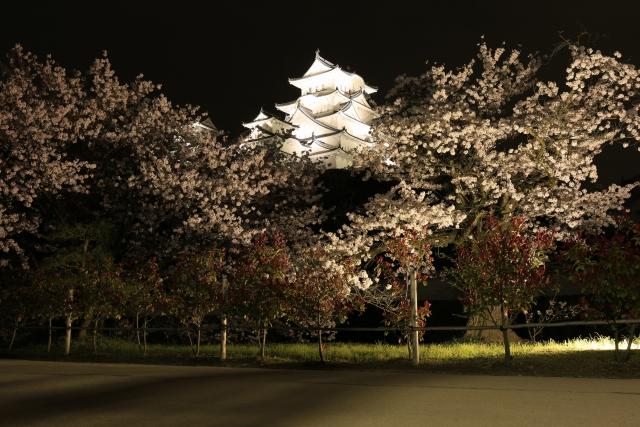 【2015/4/4撮影】菱の門の北側から見た姫路城と夜桜