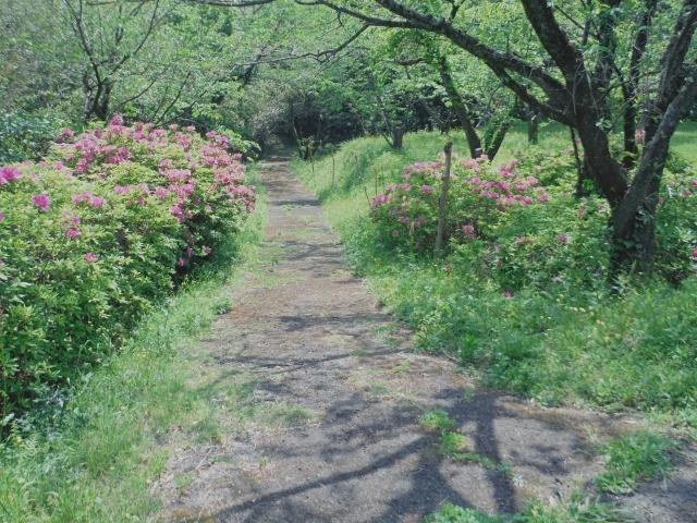隈媛神社へ進む登山道(下り)