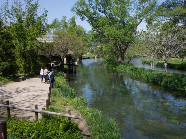 水車小屋。黒沢映画『夢』のロケ地になったそうです。 (2014/5/4)