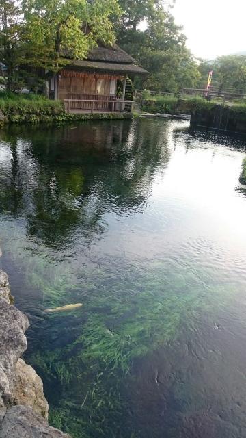 透明度の高い池です。