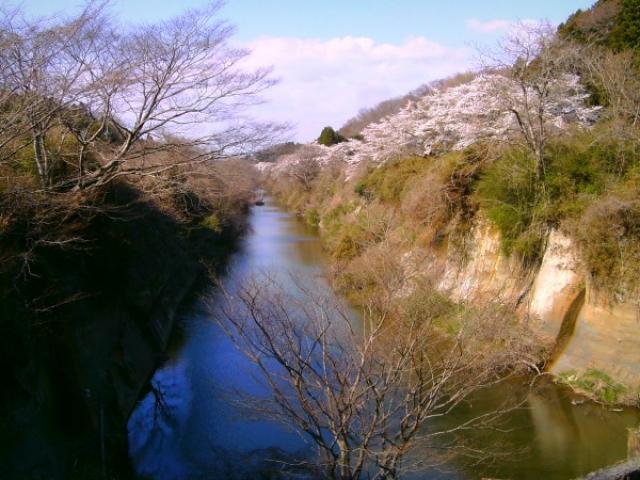 高城川の桜並木